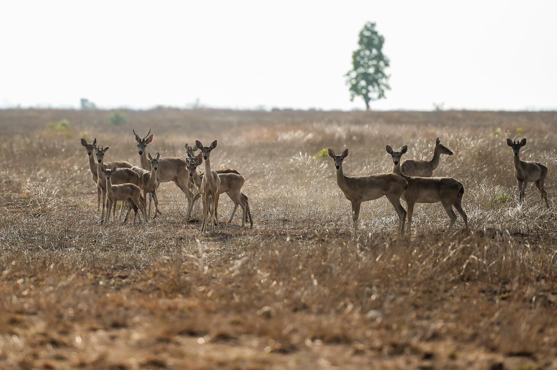 crowdfunding-brings-life-saving-water-to-myanmars-deer-1582201844