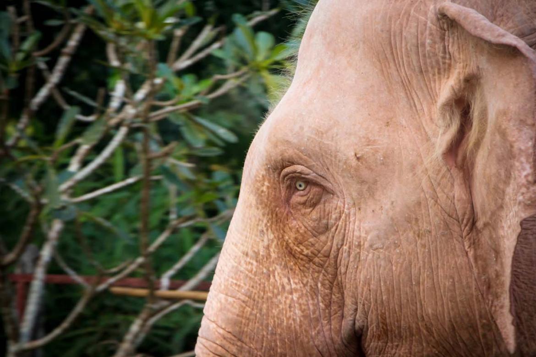 improving-life-for-yangons-white-elephants-1582180650