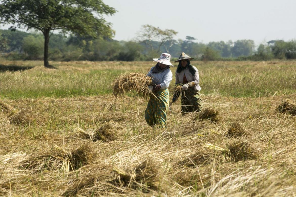 unwieldly-loan-limit-causing-complications-for-nations-farmers-1582173605