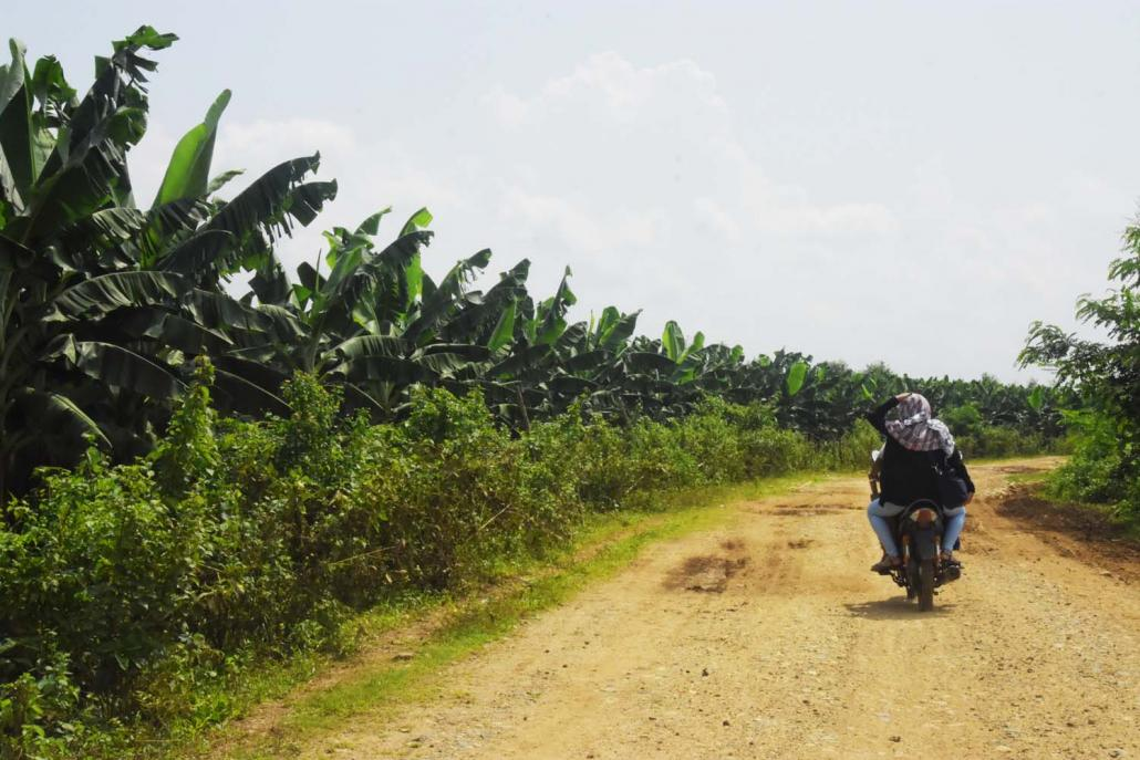 Illegal banana plantations stretch for miles in Waingmaw Township. (Hein Ko Soe | Frontier)
