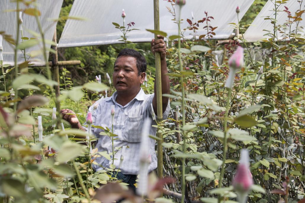 U Zaw Naing at his flower farm in Hmawbi. (Nyein Su Wai Kyaw Soe | Frontier)