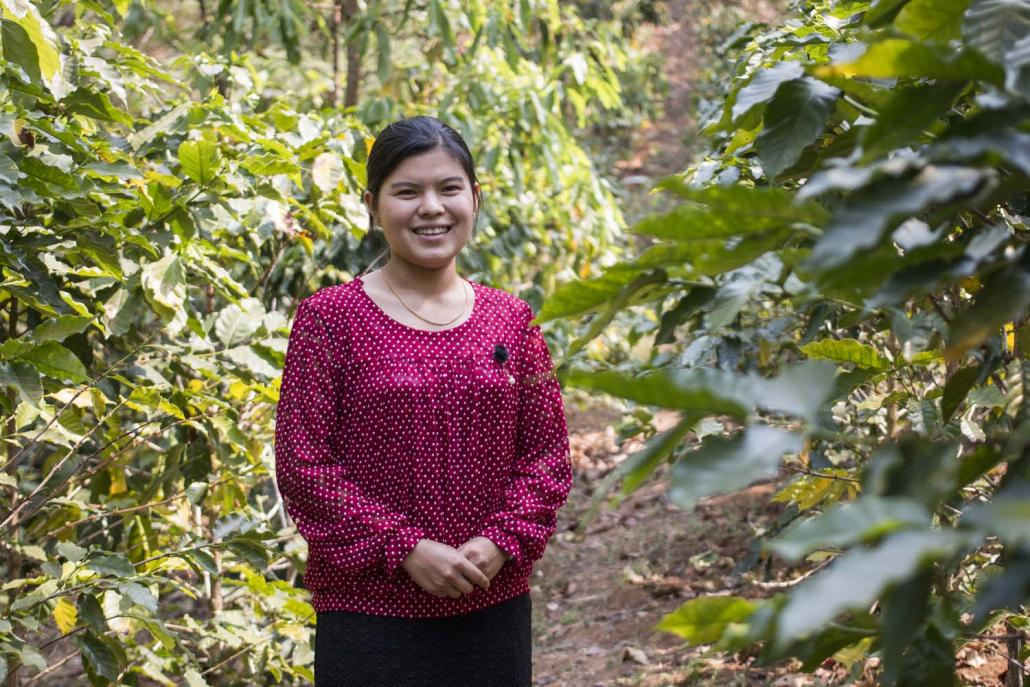 Nang Su Su Kyi from Long Hay village near Hopong switched from growing opium to coffee with support from the UNODC (Nyein Su Wai Kyaw Soe | Frontier)