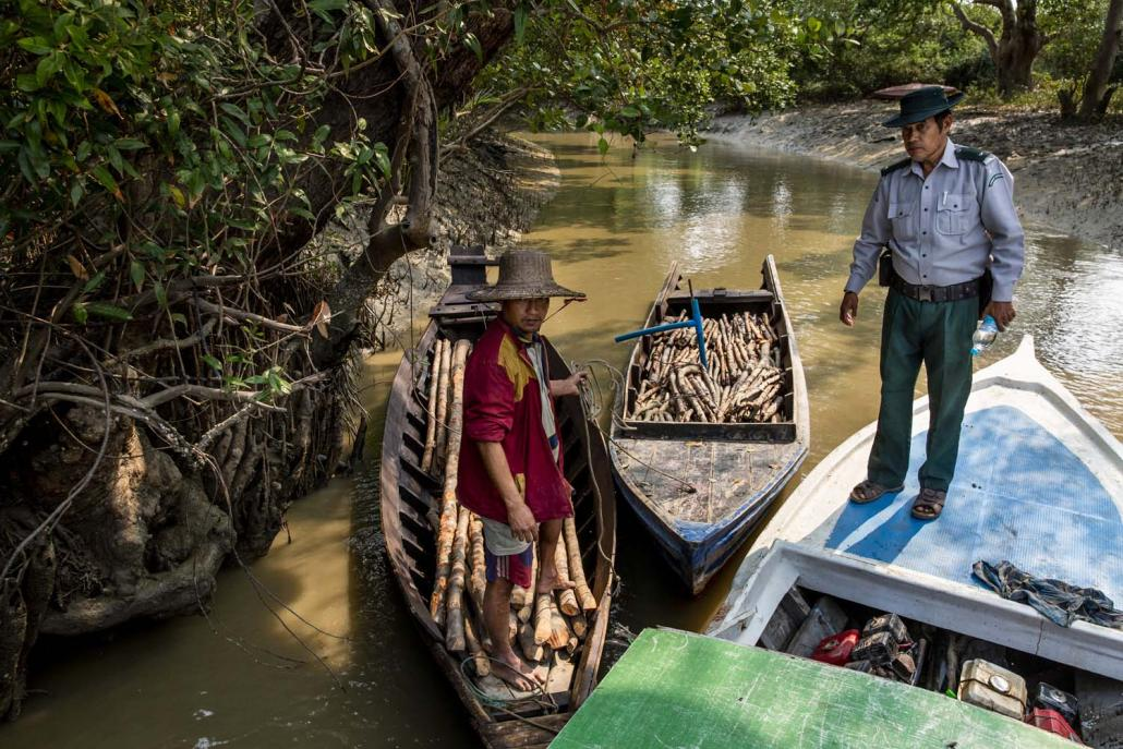 A forestry officer stands beside boats laden with illegally cut timber that were arrested during a monthly patrol in the wildlife sanctuary in late February. (Hkun Lat | Frontier)
