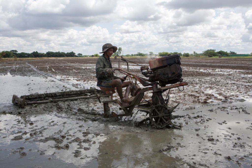 A farmer ploughs a paddy field in Yangon's Twante Township on May 29. (Thuya Zaw | Frontier)