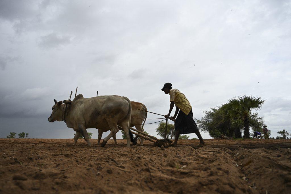 A farmer ploughs a field in Magway Region. (AFP)