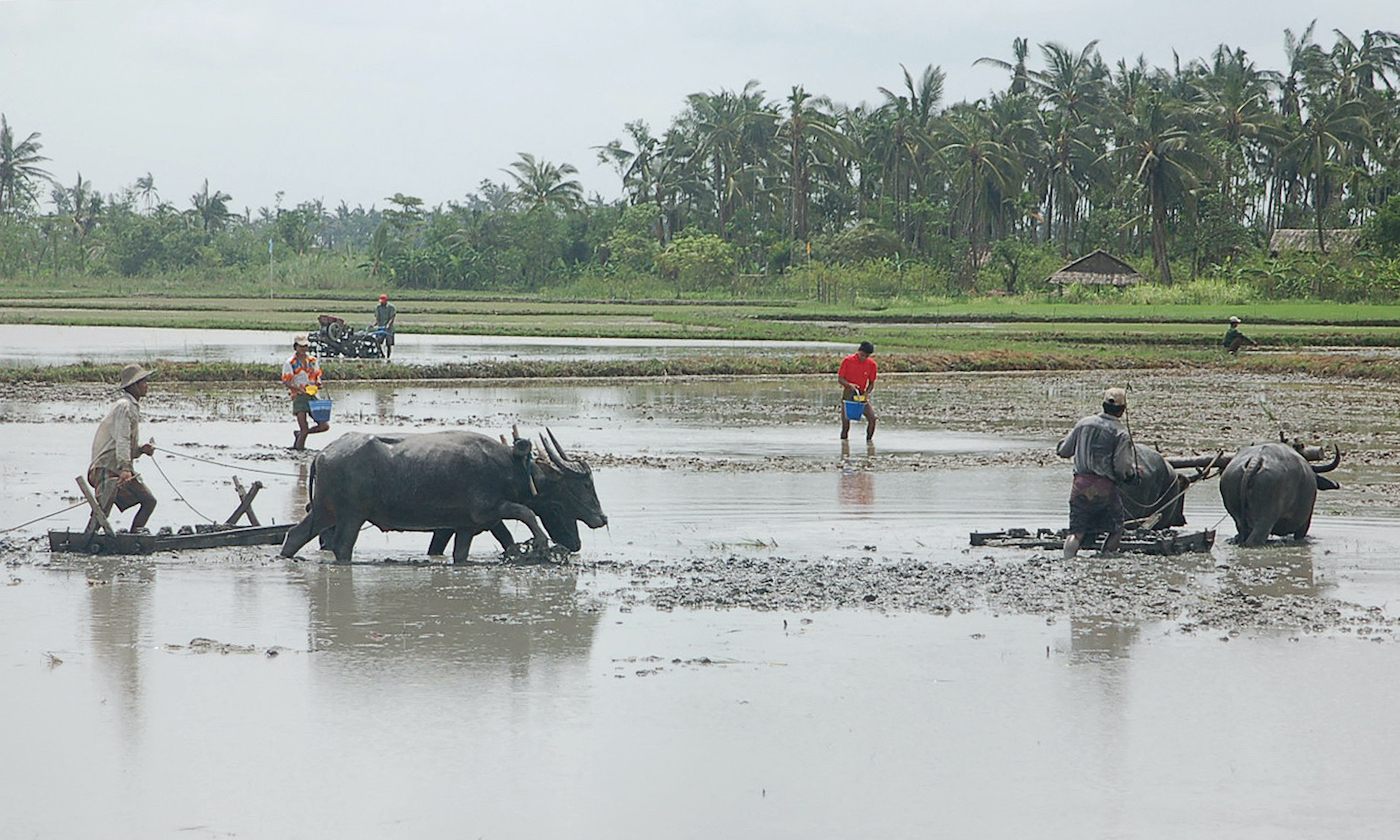 Farmers in the Ayeyerwaddy Delta south of Yangon plough fields to grow rice in 2008. (AFP)
