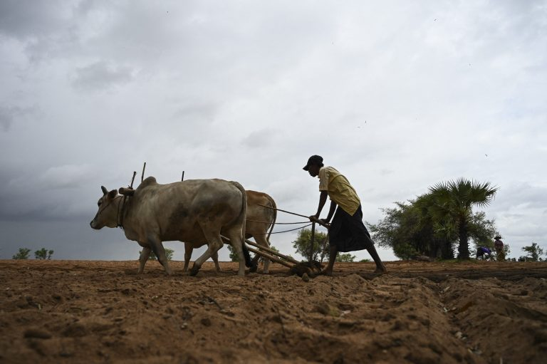 A farmer ploughs a field in Magway Region. (AFP)