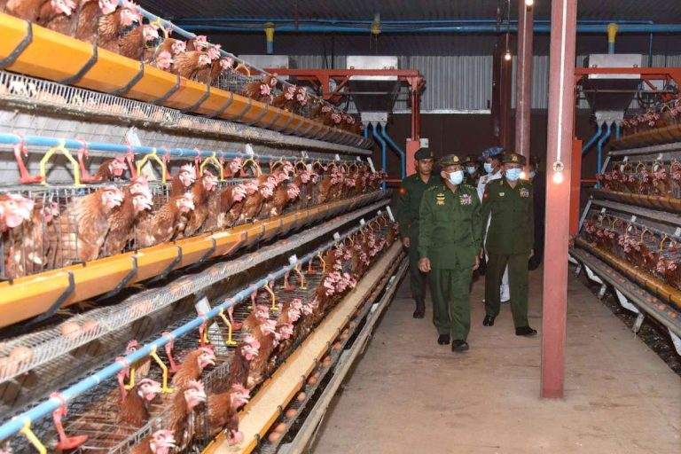 Senior General Min Aung Hlaing inspects a chicken breeding facility inside the North-East Command headquarters in northern Shan State and gives necessary instructions. (Commander-in-Chief's Office)