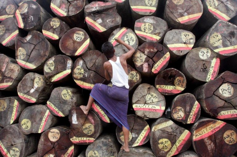 a-new-harvest-for-myanmars-timber-sector-1582237247