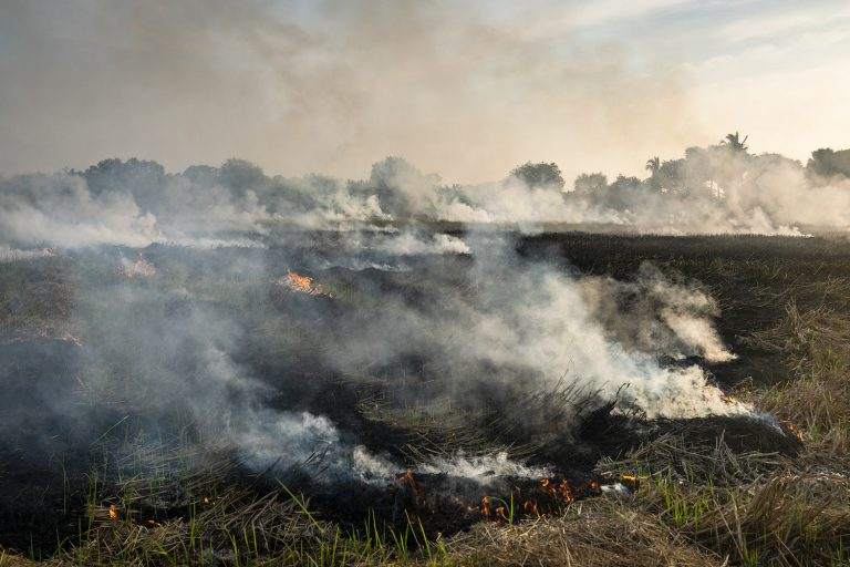 Farmers burn rice straw to clear a field beside the road between Dala and Twante in Yangon Region on December 14. Biomass burning, including crop residues, contribute significantly to Yangon's air pollution. (Hkun Lat | Frontier)