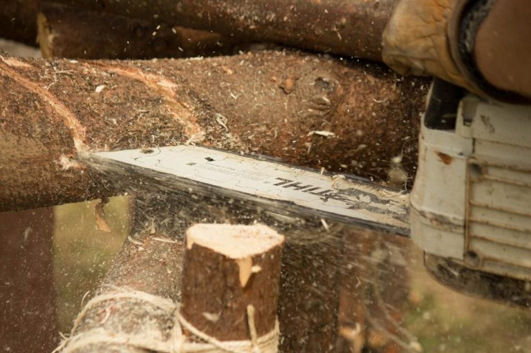 chainsaw-injuries-tied-to-illegal-logging-1582188633