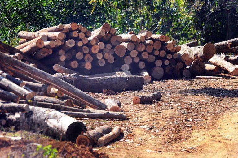 danish-decision-blocks-sale-of-myanmar-teak-says-watchdog-1582174887