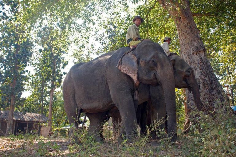 elephants-find-a-haven-from-poachers-1582188026