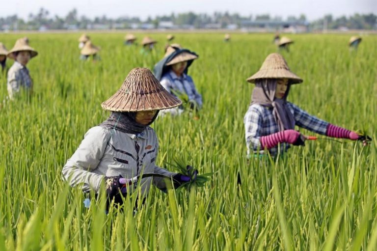 eu-reinstates-duties-on-cambodia-myanmar-rice-1582173163