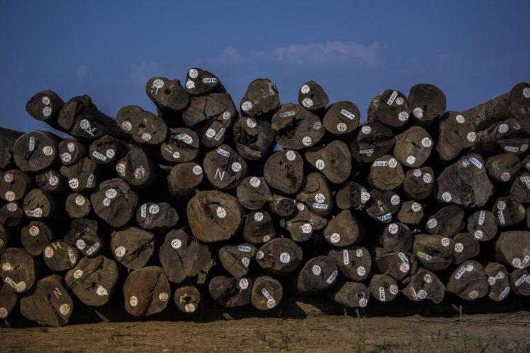 fallen-timber-uneasy-officials-1582192889