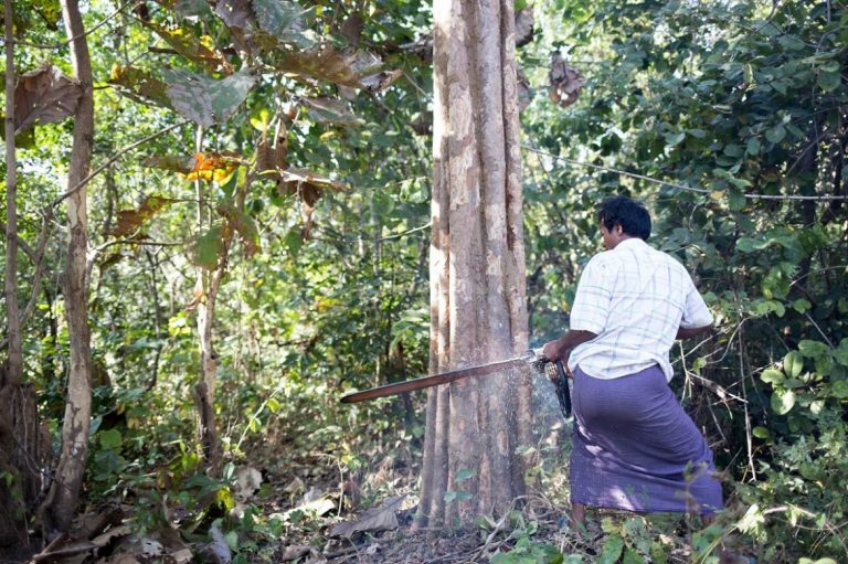 fight-to-control-chainsaws-could-turn-tide-on-illegal-logging-1582186935