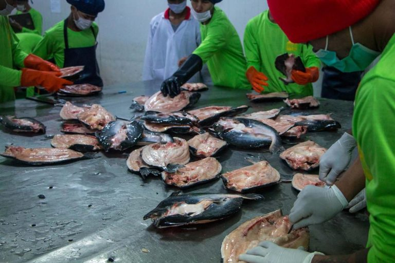 fisheries-sector-upgrades-as-exports-set-records-1582173176