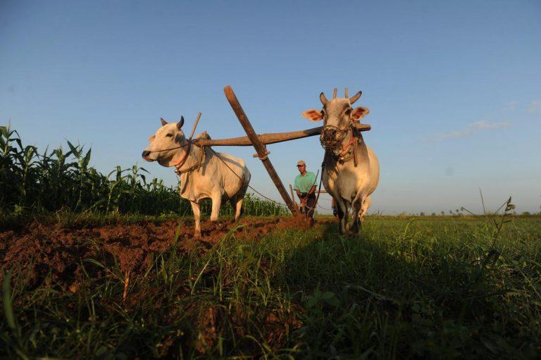 ifc-to-invest-7-5m-in-myanmar-awba-rural-finance-scheme-report-1582176032