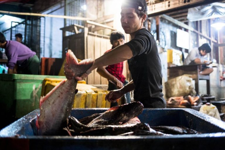 myanmar-fisheries-keen-to-scale-up-1582237816