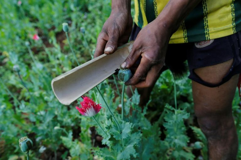 myanmar-opium-production-down-overall-steady-in-conflict-areas-1582212106