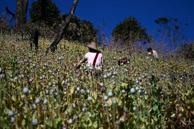 myanmars-opium-farmers-cling-on-to-lucrative-crop-1582203652