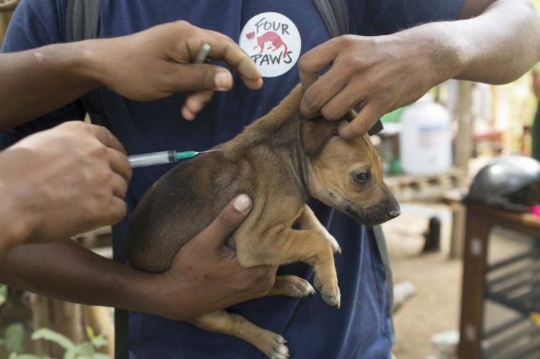 nets-darts-and-vaccines-mobilised-to-fight-rabies-1582181047