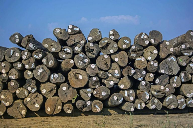 uk-suspends-funding-for-timber-industry-project-1582173527