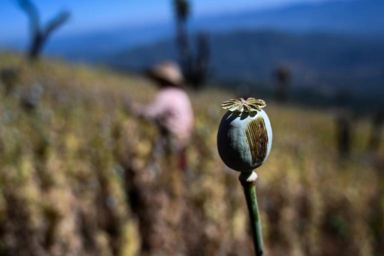 un-opium-survey-distorts-the-facts-says-think-tank-1582203033