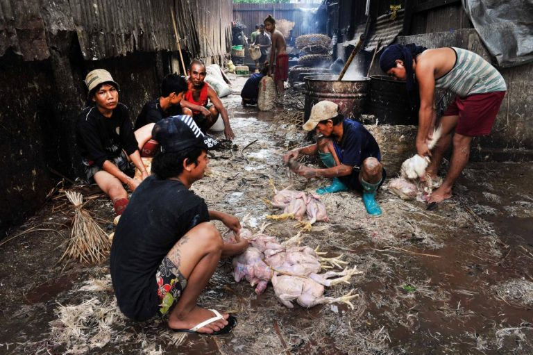 whats-education-reform-got-to-do-with-the-price-of-chicken-1582233093