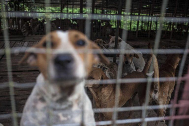 yangons-stray-dog-saviour-1582185130